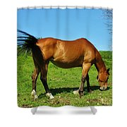 Tail Swatting Flies Shower Curtain