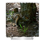 Tailfeathers Shower Curtain