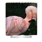 Taking A Bow Shower Curtain