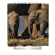 Tall And Short Shower Curtain