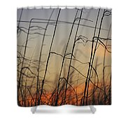 Tall Grasses Blowing In The Wind Shower Curtain