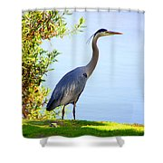 Tall Grey Heron Shower Curtain