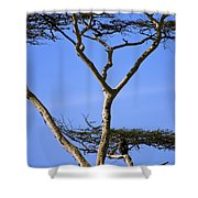 Tall Serengeti Tree And Baboon Shower Curtain