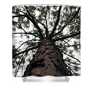 Tall Tree Shower Curtain