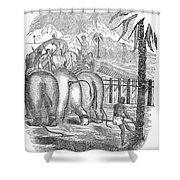 Taming Wild Elephants Shower Curtain