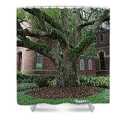 Tampa Tree  Shower Curtain