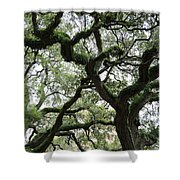 Tampa Trees Shower Curtain