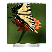 Tantalizing Tiger Swallowtail Butterfly Shower Curtain