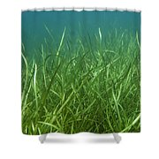 Tapegrass In Freshwater Lake Shower Curtain