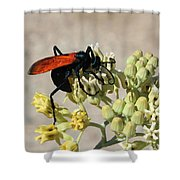 Tarantula Hawk Wasp Shower Curtain