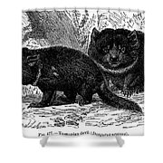 Tasmanian Devil Shower Curtain