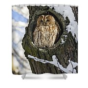 Tawny Owl Strix Aluco In Nest Hole Shower Curtain