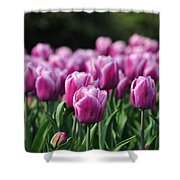 Taylor's Tulips Shower Curtain
