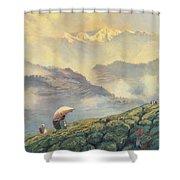 Tea Picking - Darjeeling - India Shower Curtain