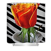 Tea Rose In Striped Vase Shower Curtain