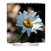 Tea Stained Daisy Shower Curtain