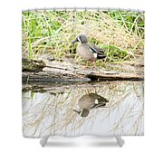 Teal Duck Standing On A Log Shower Curtain