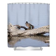 Teal On A Stump Shower Curtain