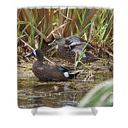 Teal Pair In The Cattails Shower Curtain
