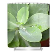 Tears Of Raindrops Shower Curtain