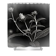 Teenagers Bw Vignette Shower Curtain