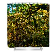 Temperate Rain Forest Shower Curtain