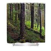Temperate Rain Forest, Carmanah-walbran Shower Curtain