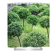 Temple Garden Trees Shower Curtain