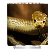 Tempter Shower Curtain