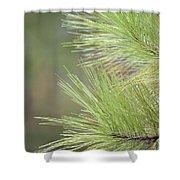 Tender Pines Shower Curtain