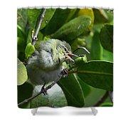 Tennesse Warbler Eating Mangrove Shower Curtain
