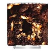 Termite Nest Shower Curtain by Science Source