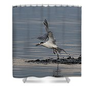 Tern Emerging With Fish Shower Curtain
