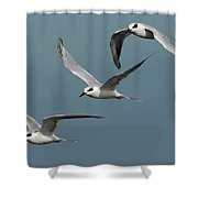 Terns In Formation Shower Curtain