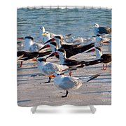 Terns Shower Curtain