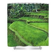 Terraced Fields Of Rice Shower Curtain