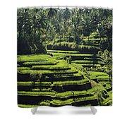 Terraced Rice Fields On Bali Island Shower Curtain