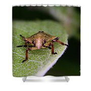 Terrestrial Turtle Bug Shower Curtain by Ted Kinsman