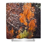 Texas Orange Shower Curtain