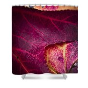 Textured Layers Shower Curtain