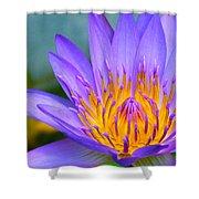 Thai Colours Shower Curtain