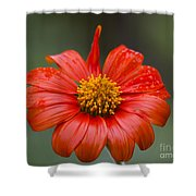 Thai Flower In Glorious Orange #2 Shower Curtain