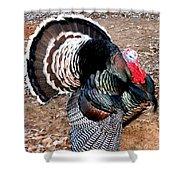 Thanksgiving Turkey Jitters Shower Curtain