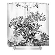 Thapsia Major Latifolia Shower Curtain