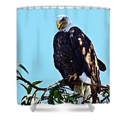 That Eagle Stare Shower Curtain