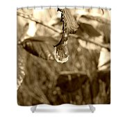 Thawing Sepia Leaves Shower Curtain