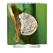 Thd Daylily Was Here Shower Curtain