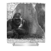 The Angry Ape In Black And White Shower Curtain