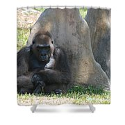 The Angry Ape Shower Curtain