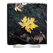 The Autumn Leaf Shower Curtain